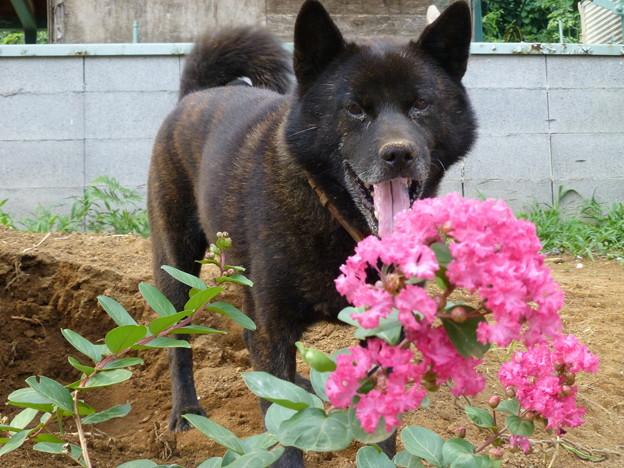 夏の花と愛犬1