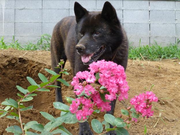 夏の花と愛犬2