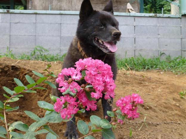 夏の花と愛犬3