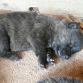 Photos: 我が家の子 愛犬