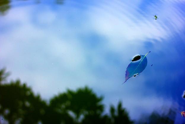 写真: 水面の空