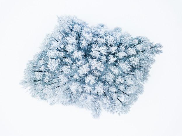 写真: snow forest