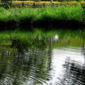 写真: 近くの公園3