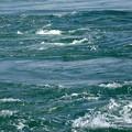 写真: 鳴門の渦潮1