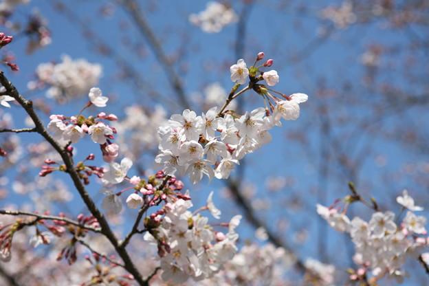 写真: 『春の足音。。。』
