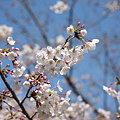 『春の足音。。。』