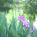 Photos: IMG_9506