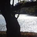 Photos: 高松の池
