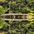 写真: 新宿御苑の風景