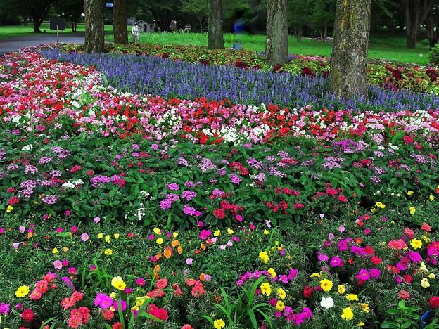 渓流広場の夏花壇