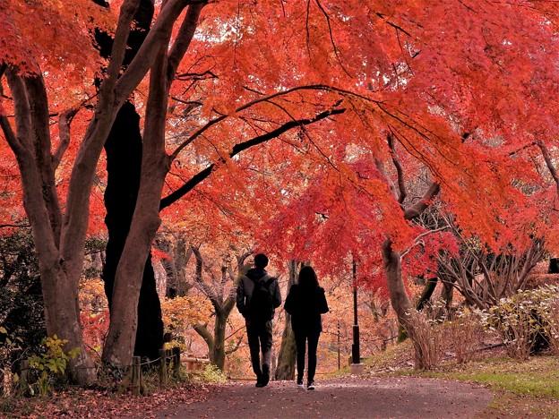 桜ケ丘公園にて