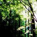 Photos: 緑が清々しい