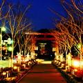 写真: 古都鎌倉