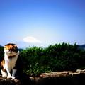 写真: 有名猫?