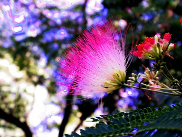 羽のような花