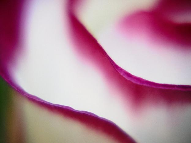 ピンクのオーロラ