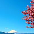 Photos: 富士と桜