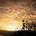 秋空の夕日