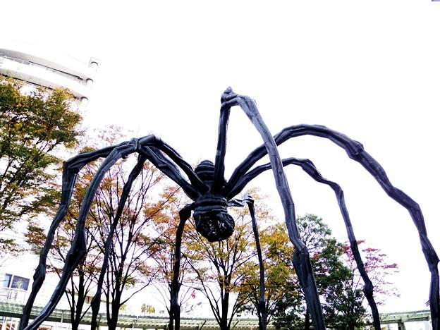 巨大クモ現る