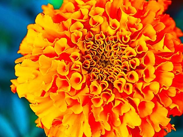 花、花、花