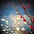 Photos: バレンタイン特集
