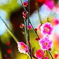 Photos: 花と蕾