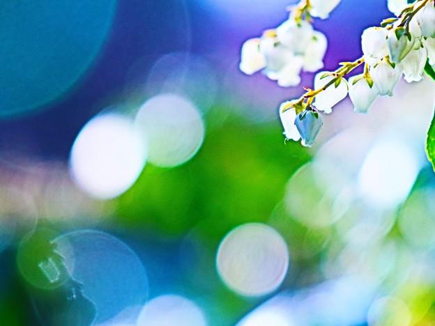 春の呼び声