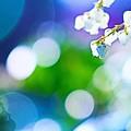 Photos: 春の呼び声
