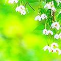 みどりに白のお花