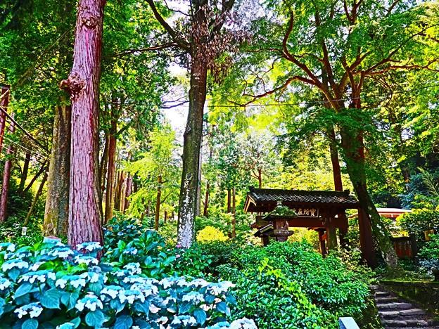 森林の中のお寺
