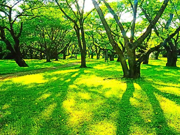 Photos: 森へ