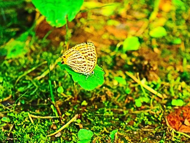 Photos: 見た事の無い蝶
