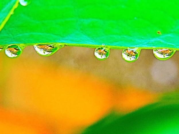 雨の日の贈り物