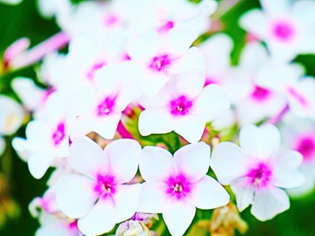 Photos: 可愛いお花