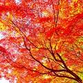 Photos: 赤の秋