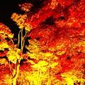 紅葉シーズン