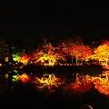 Photos: 映る紅葉