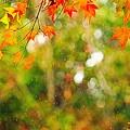 Photos: 時雨紅葉