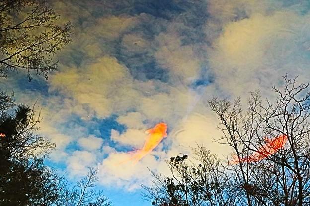 雲の中を泳ぐ