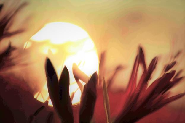 太陽とマン
