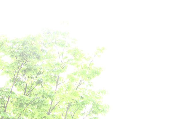 写真: 薄明かり