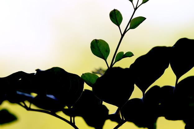 写真: 光と影のように