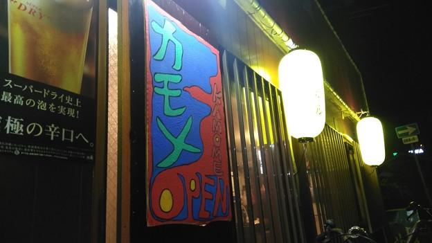 Photos: カモメ