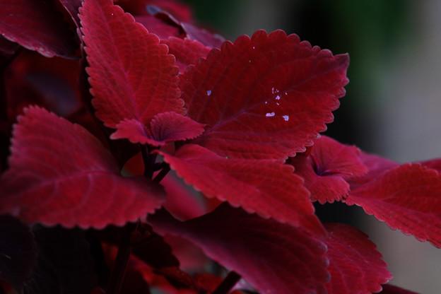 写真: 秋の空気