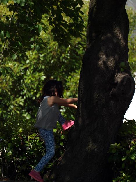 どきどき木登り