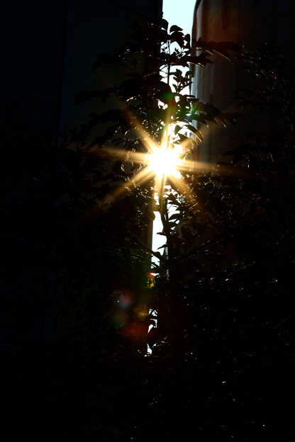 Photos: Sunlight through the city.
