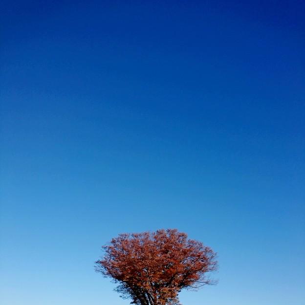雲一つ無い秋晴れ