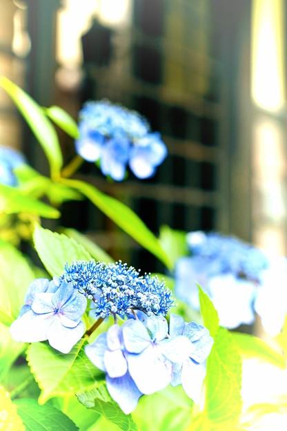 写真: 青色