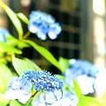 Photos: 青色