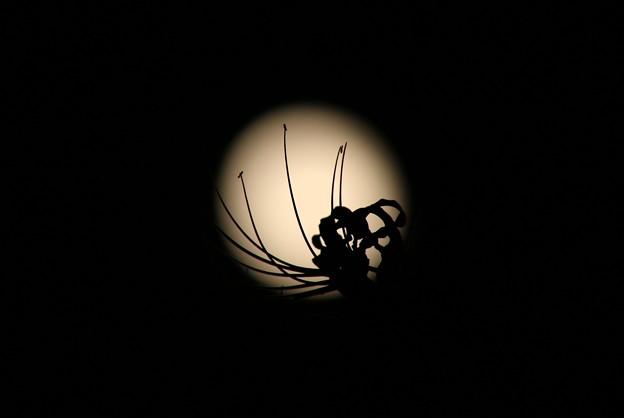 写真: to the moon